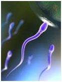 Healthy Sperm